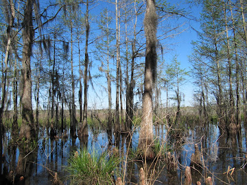 Honey Island Swamp - 15 mars