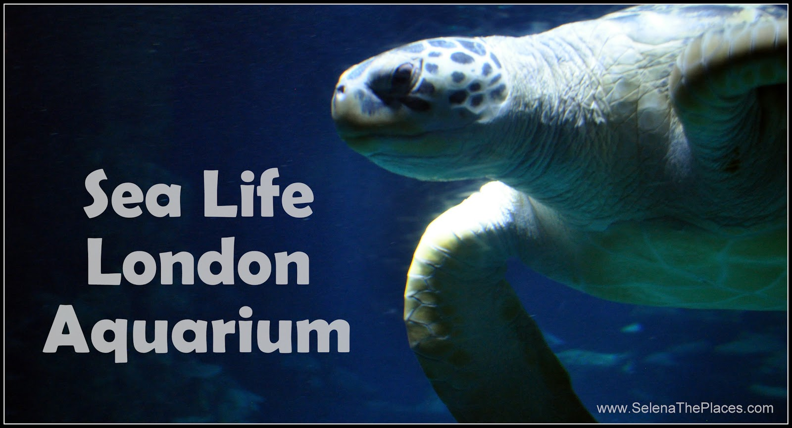 Oh The Places We Will Go Sea Life London Aquarium