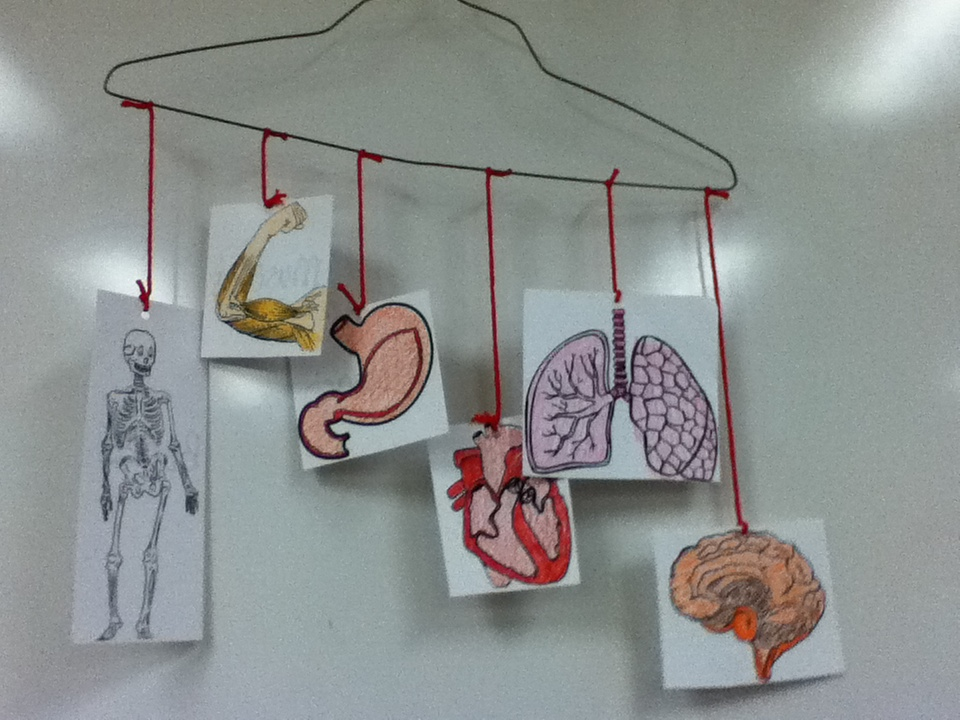 Second2Grade: Human Anatomy Vest and Mobile