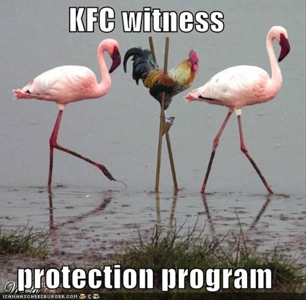 Funny chicken memes - photo#18