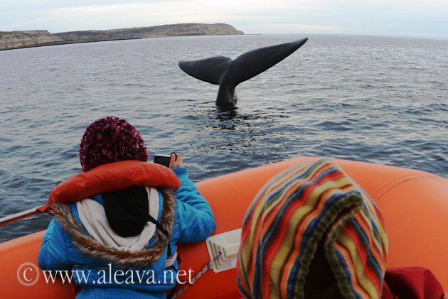 Whale Watching Puerto Madryn allways come to Puerto Piramides to whale watching