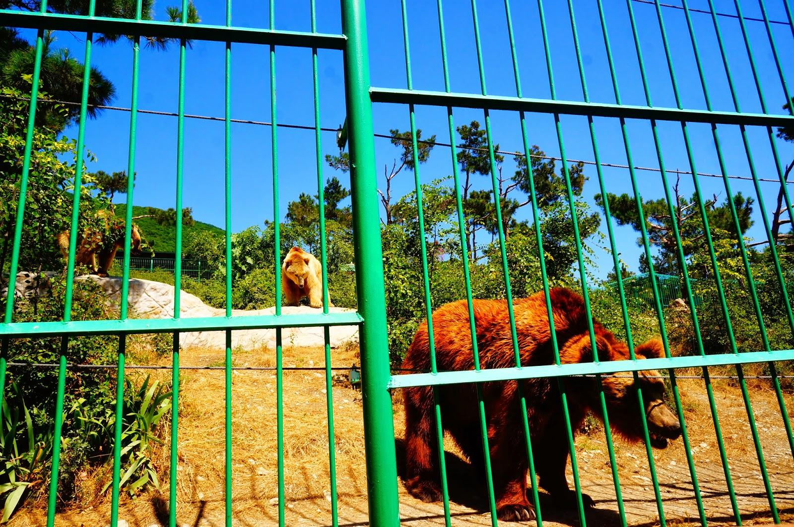 Медведи-Сафари-Парка-в-Геленджике