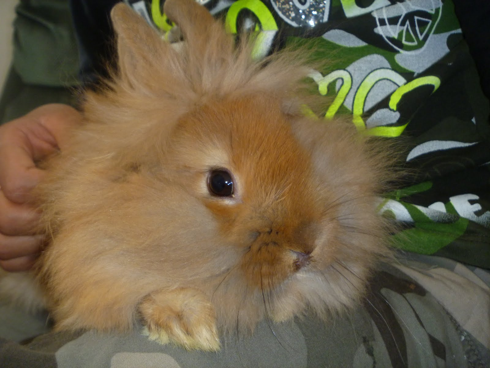 The Writing Garden: Jalapeno poppers, and Lionhead rabbits