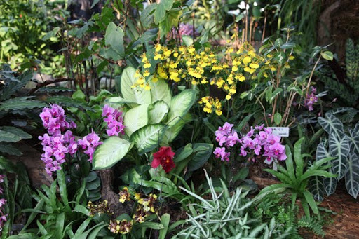 Backyard orchid plant designs, Backyard design ideas, backyard plant ideas, backyard design plant, Backyard orchid plant ideas, small backyard designs