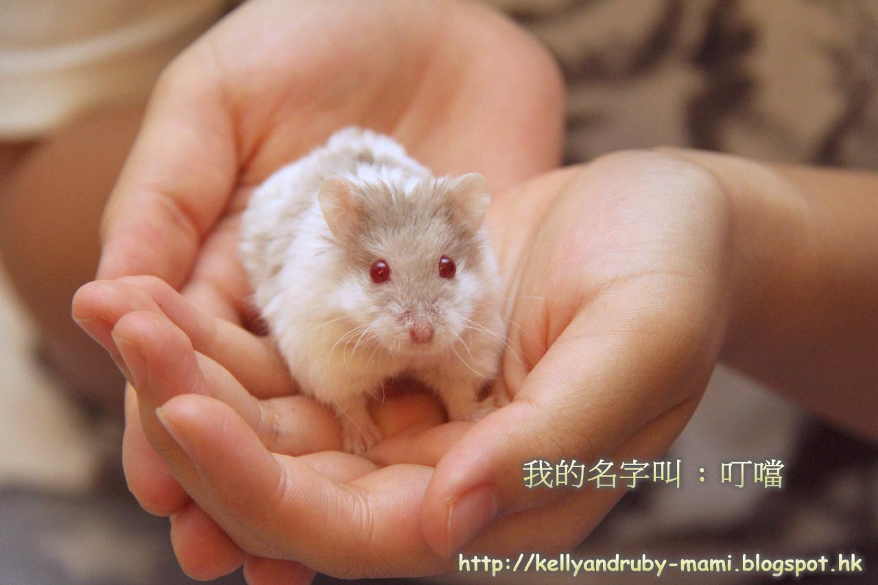 http://kellyandruby-mami.blogspot.com/2014/09/bb3.html