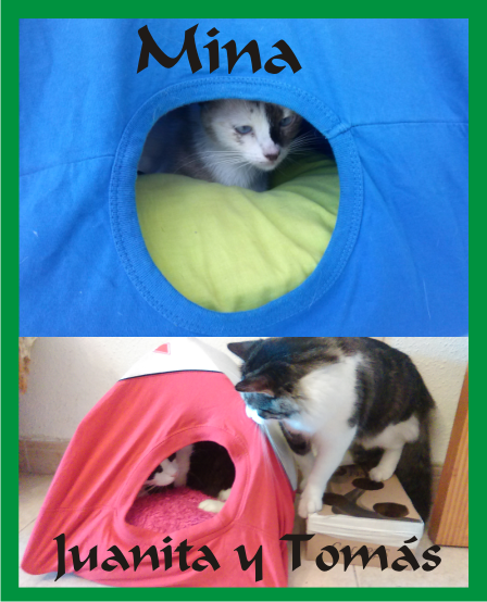 Forja-Ideas-Iglu-Gatos