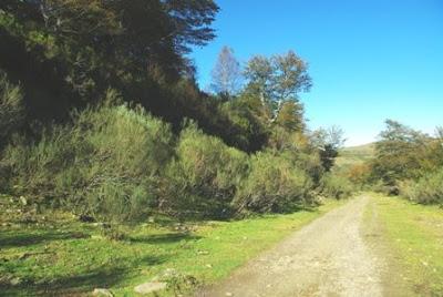 Aller, pico La Teyera, sendero hacia la cumbre