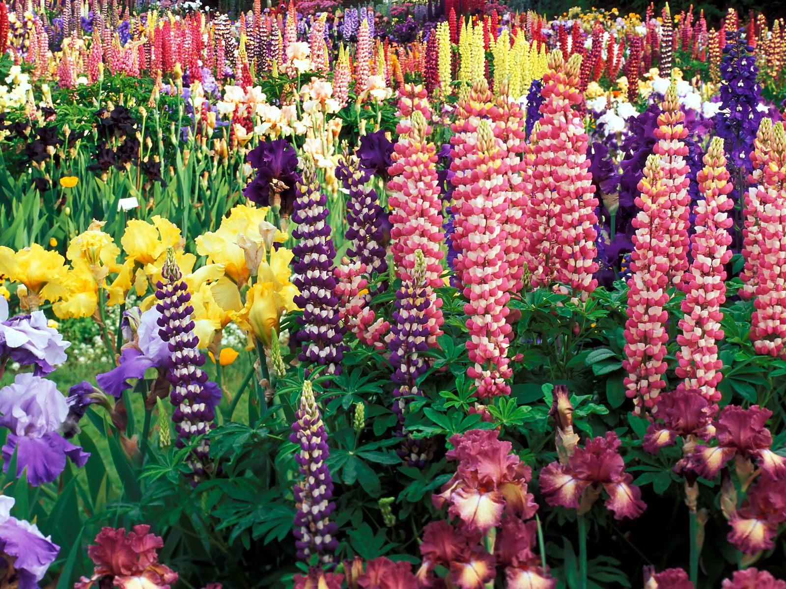 Kisahunikdidunia Foto Foto Kebun Bunga Yang Indah