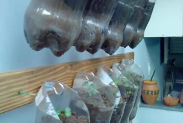 Horta vertical de garrafas PET e restos de cama quebrada
