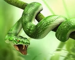 Why does the snake does not die from its own venom?