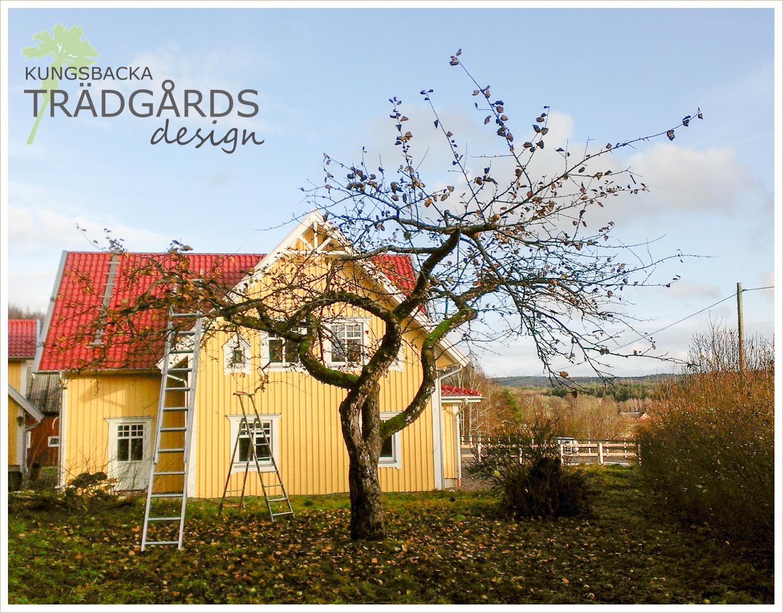 Kungsbacka trädgårdsdesign: november 2012