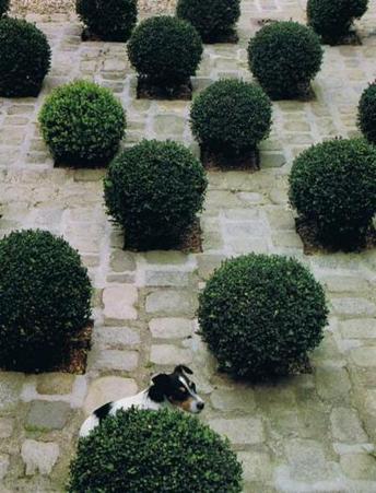 Topiary and tiramisu checkerboard gardens for Checkerboard garden designs
