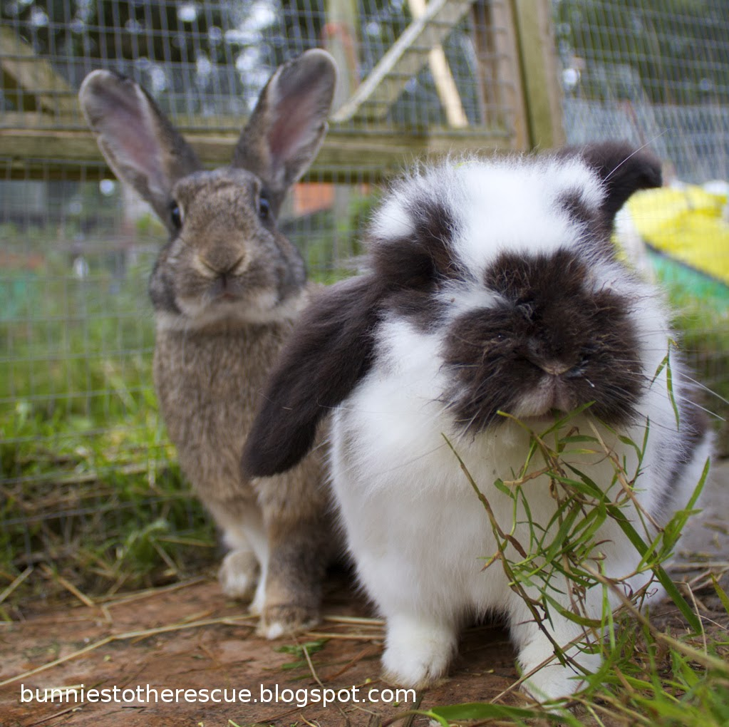 Sunday Bunny Blogging >> Big Ears Tiny Tales Blogging Off