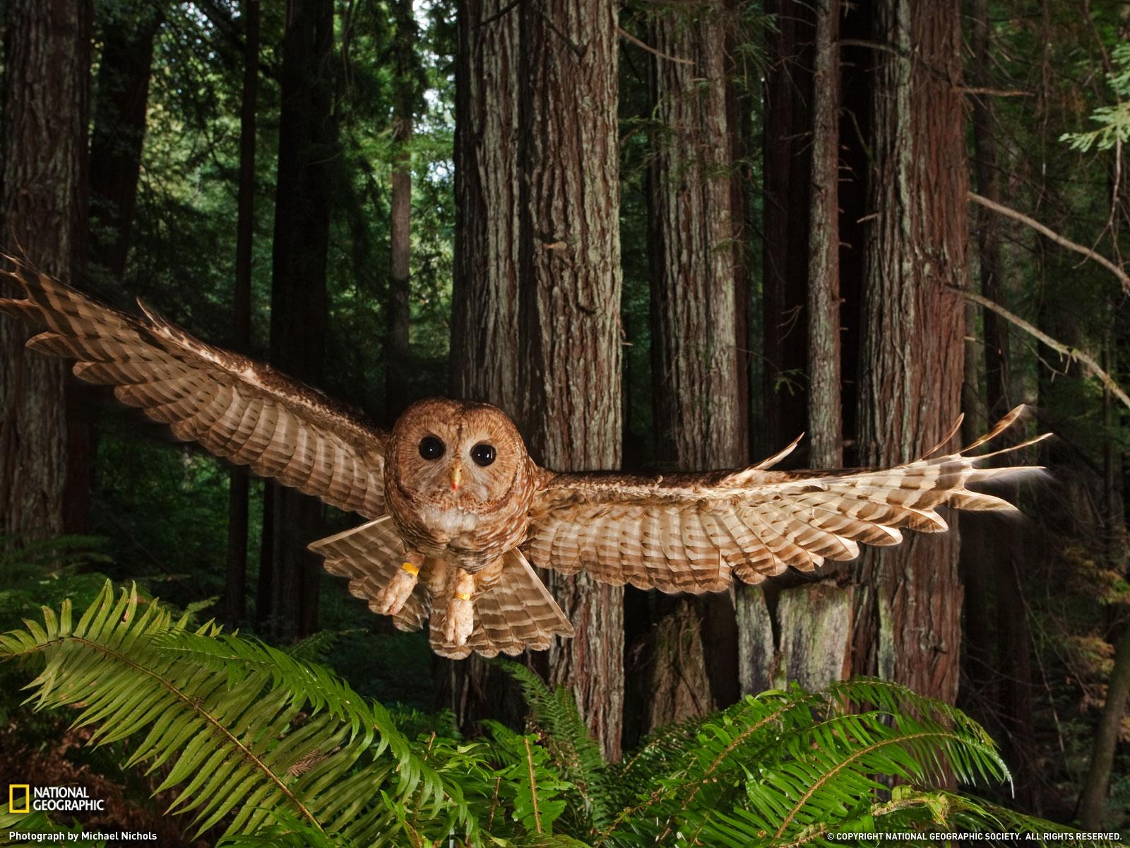 http://4.bp.blogspot.com/-xO-MSuD6Vwo/UTS2foRjkLI/AAAAAAAABBc/13w_grwjlUI/s1600/Redwood-Forest-Wallpaper.jpg