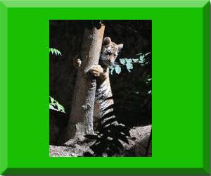 gambar_macan_memeluk_pohon