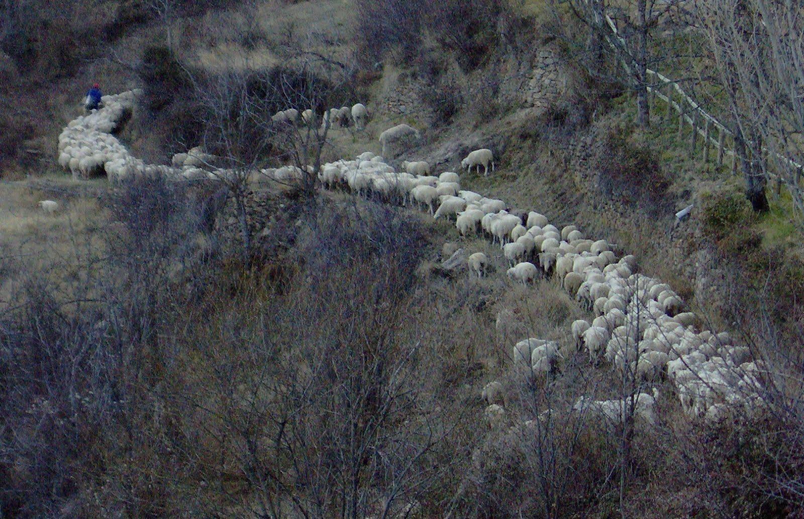 Camins de llana