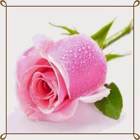 Una rosa para María