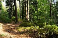 Herbst, Wandern und Schwarzwald - die perfekte Kombination