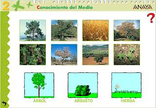 http://www.ceipjuanherreraalcausa.es/Recursosdidacticos/SEGUNDO/datos/03_cmedio/03_Recursos/actividades/04/act3.htm