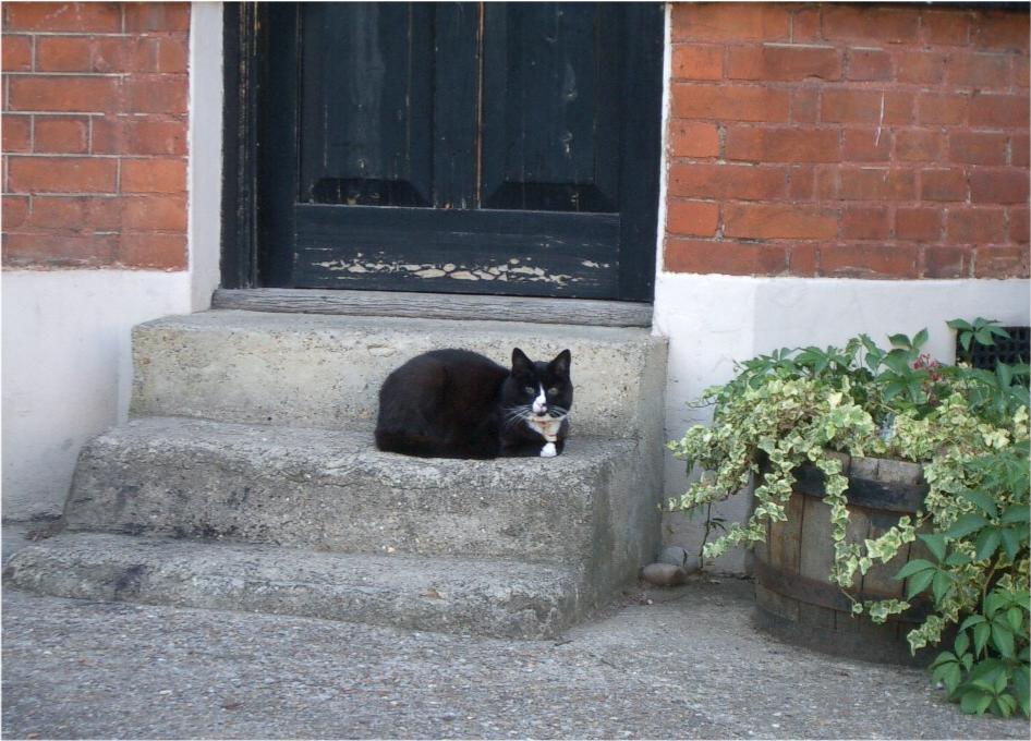 cat_doorstep.jpg