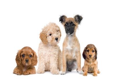 puppy training for dummies pdf