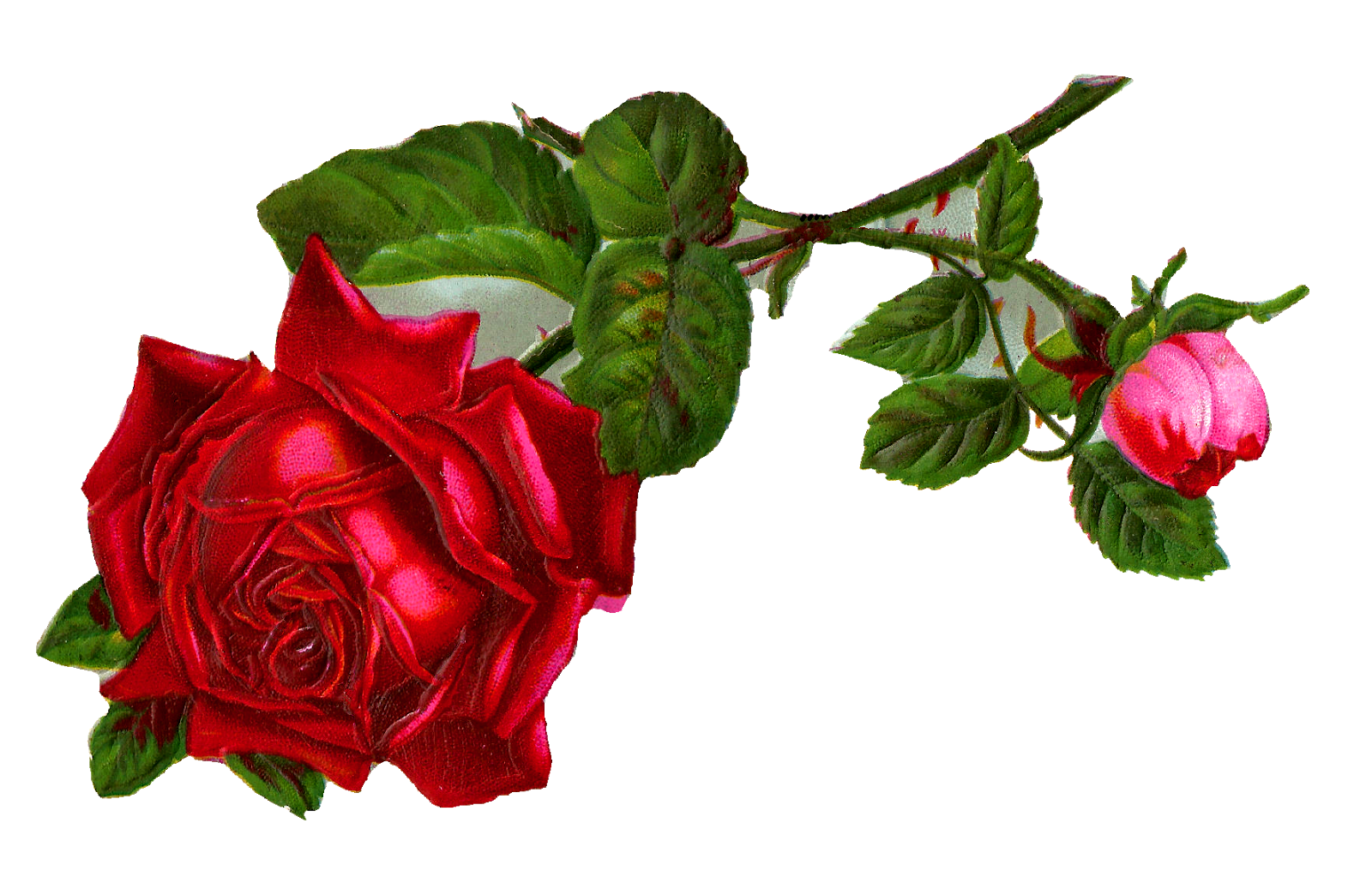 Antique Images: Stock Red Rose Digital Clip Art