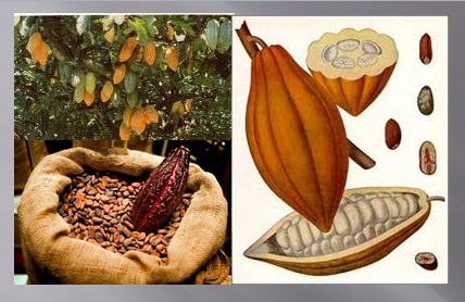http://www.google.com.ec/search?hl=es&biw=1280&bih=619&gbv=2&tbm=isch&sa=1&q=cacao&oq=cacao&aq=f&aq