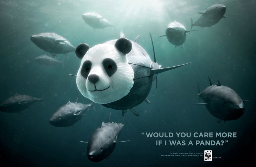 WWF: Bluefin Tuna. Would You Care More If I Was A Panda?