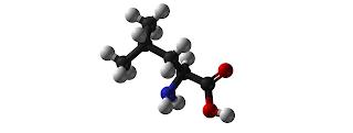 Leusin (Leucine), Sumber,  Fungsi, dan  Manfaat