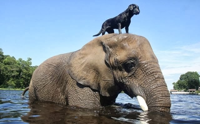 amazing friendship