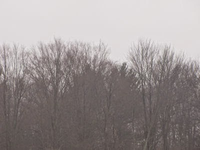 gray trees, gray sky