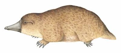 monotremata prehistoricos Steropodon