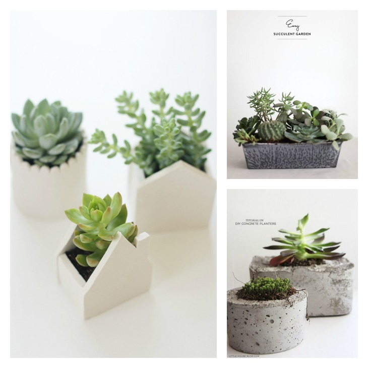 Diy air plants amp succulents diy roundup very shannon