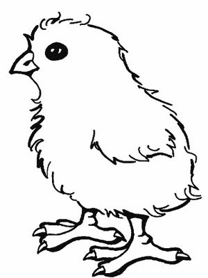 Line Drawing :: Clip Art :: Chick