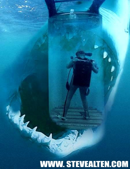 The Biggest Shark In The World Pictures