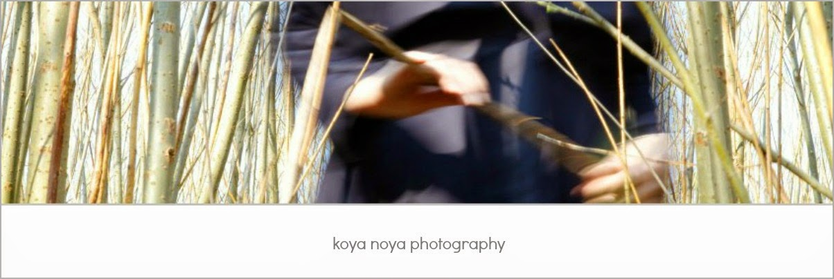 koya noya