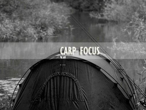 Carp-Focus