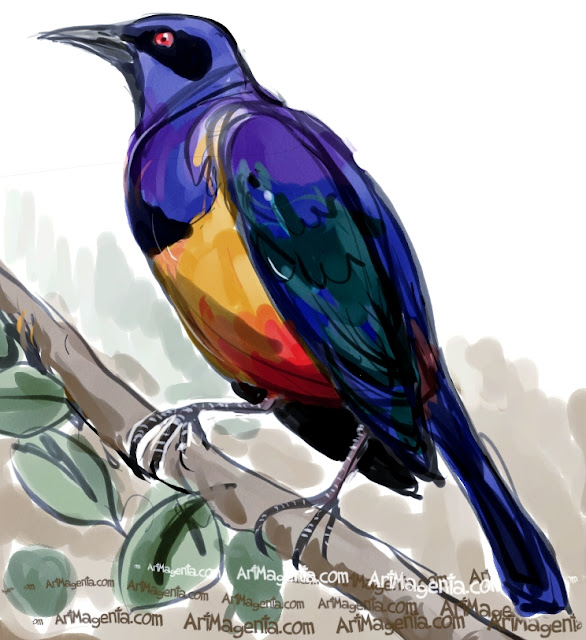 Hildebrandt's Starling sketch painting. Bird art drawing by illustrator Artmagenta