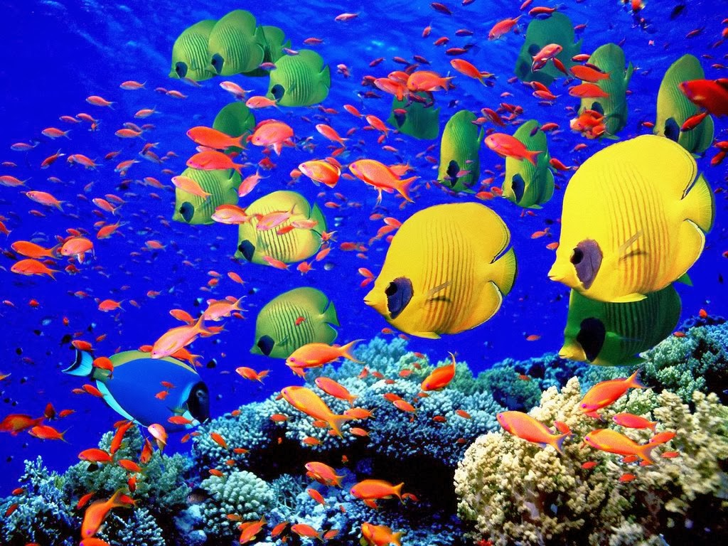 Saltwater cool tropical free fish wallpaper beautiful for Cool tropical fish