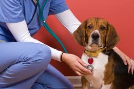 Common Nerve Disorders Amongst Dogs