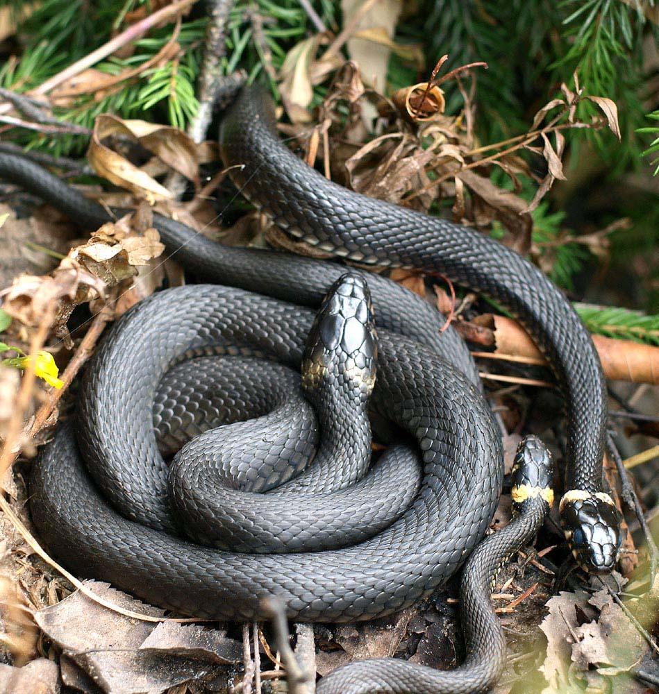 Значение Мужские Все о Змея Как дома