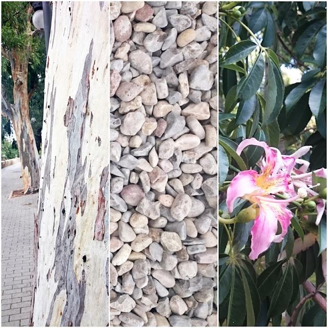 kamienie na plaży, piękne miejsca w Walencji, kwitnące drzewa, cudowna korz drzew, jakie drzewa mają ładną korę