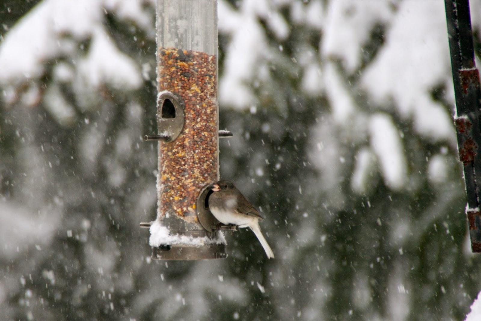 birdfeeder winter