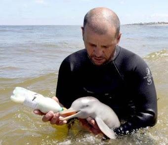 - Richard Tesore con un Bebe Delfin