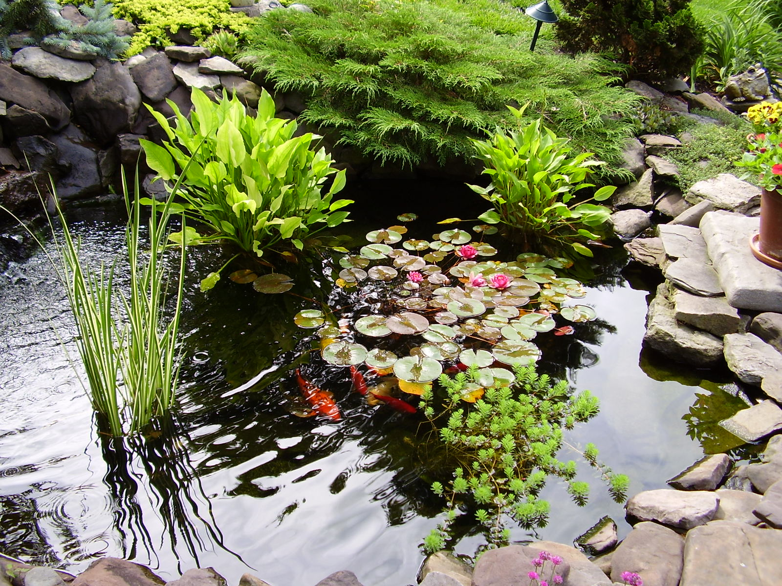 Sonyquevedoclasesdeplantascolombianas for Planter fish pond