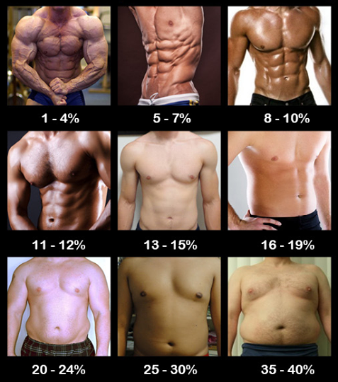 What's your body fat percentage? | Muscle Day