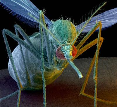 超級蚊子 消除瘧疾