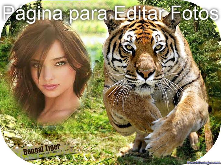 Pagina Para Editar Fotos Fotomontaje Con Un Lindo Tigre