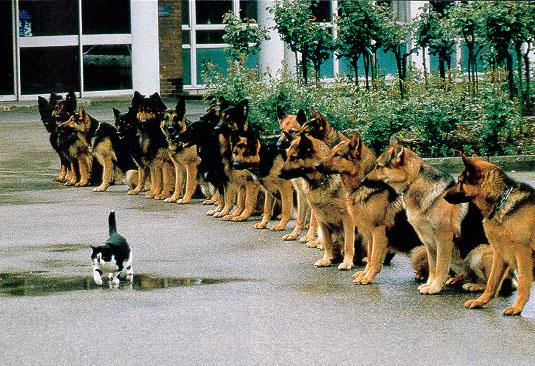 major with german shepherds army