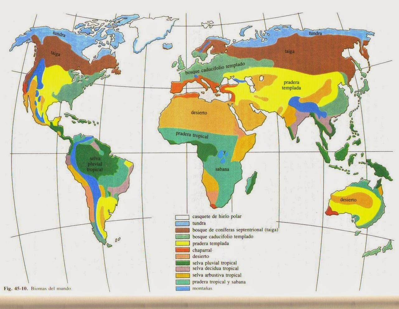 Biomas del mundo sabana tropical for Cajeros automaticos cerca de mi ubicacion